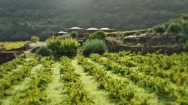 pantelleria vite
